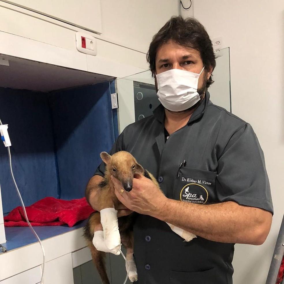 Animal foi resgatado pelo veterinário Kleber Martins — Foto: Kléber Martins/Arquivo pessoal