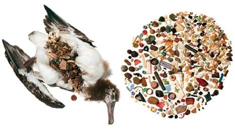 Quase todos os seres vivos do planeta estão contaminados com plástico.  (Foto: Creative Commons / Mikes Foto)