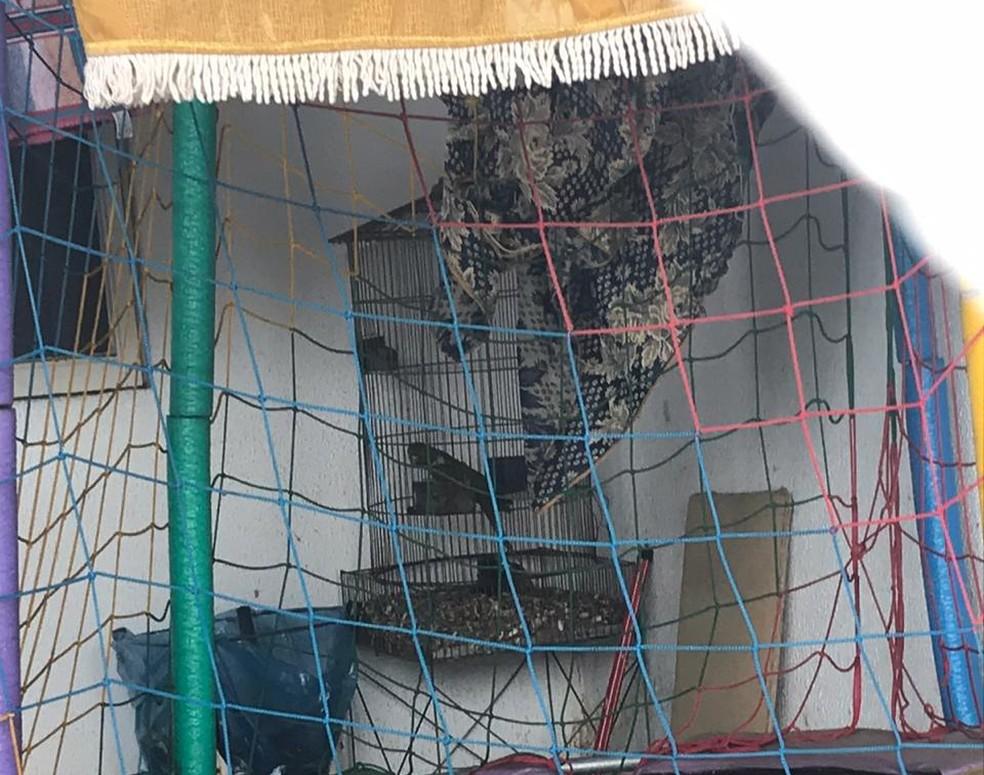 Periquitão-maracanã era mantido em cativeiro na garagem de uma casa em Marília — Foto: Polícia Ambiental/Divulgação