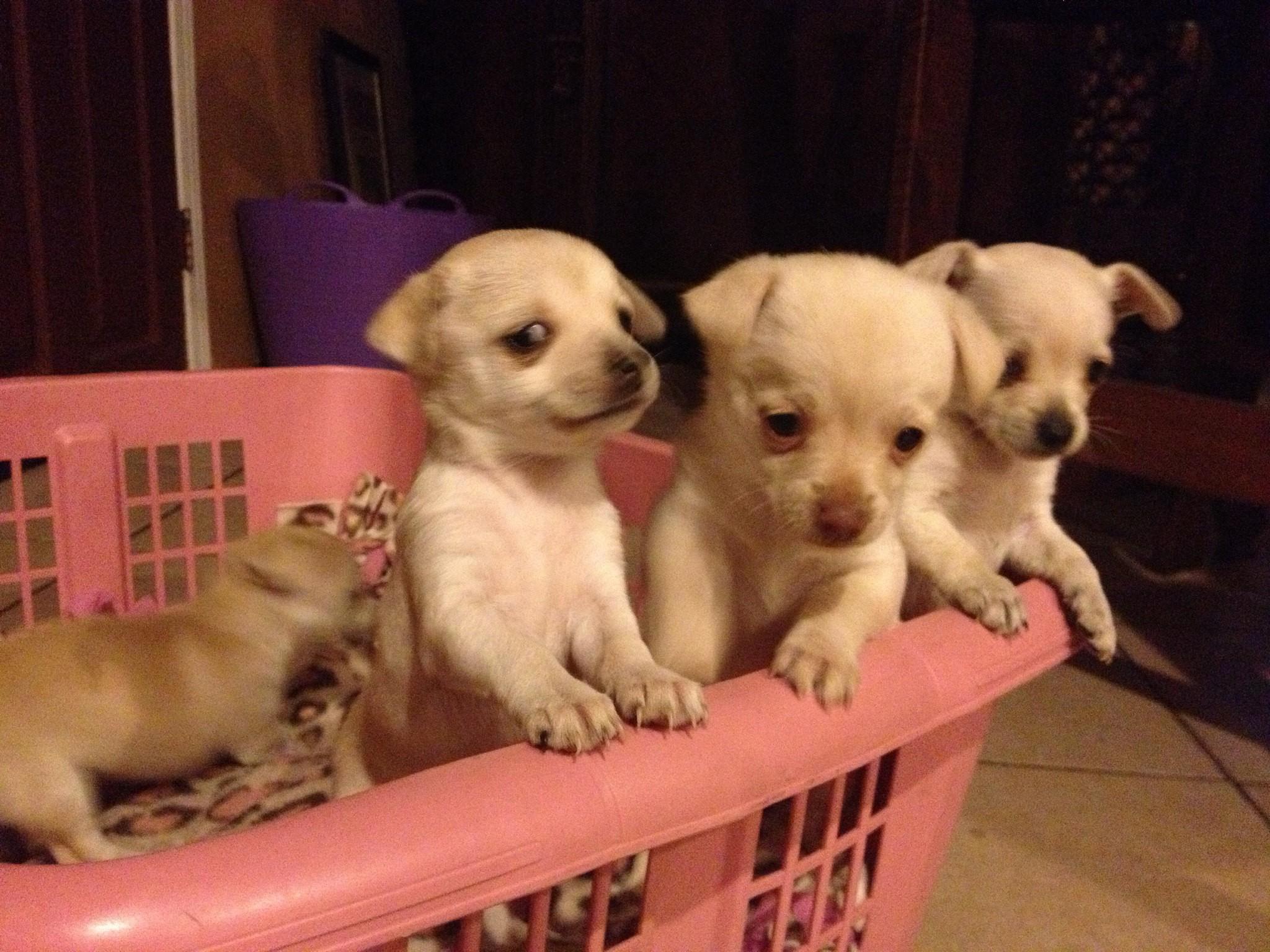 Mais de 200 cachorros foram encontrados na propriedade de Donna Roberts, em Nova Jersey, nos EUA (Foto: Flickr/Jennifer)