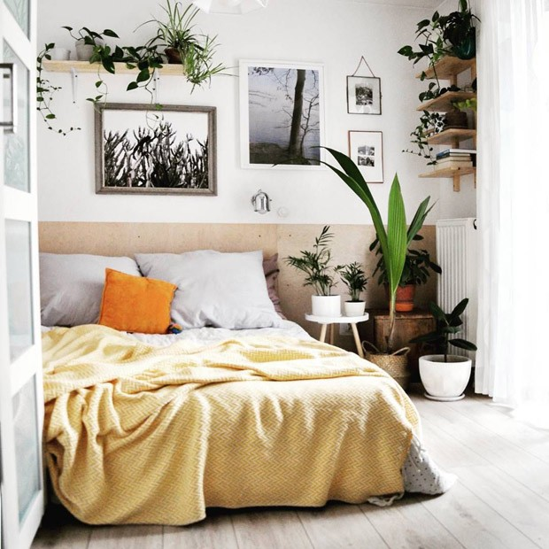 Plantas no quarto: as melhores espécies para dormir melhor (Foto: Reprodução)