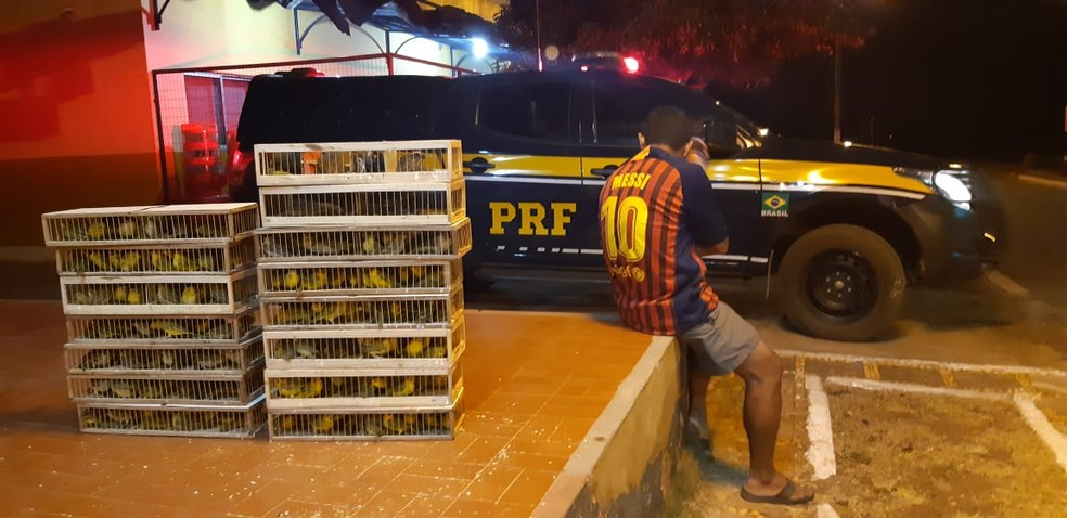 Homem confessou que receberia R$ 11 mil pelas aves — Foto: Divulgação/PRF