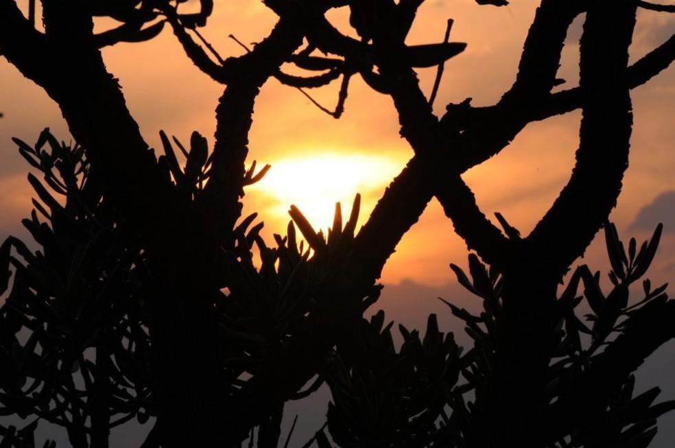 Resultado de imagem para Semana do Cerrado faz ações sobre sustentabilidade em vários pontos do DF