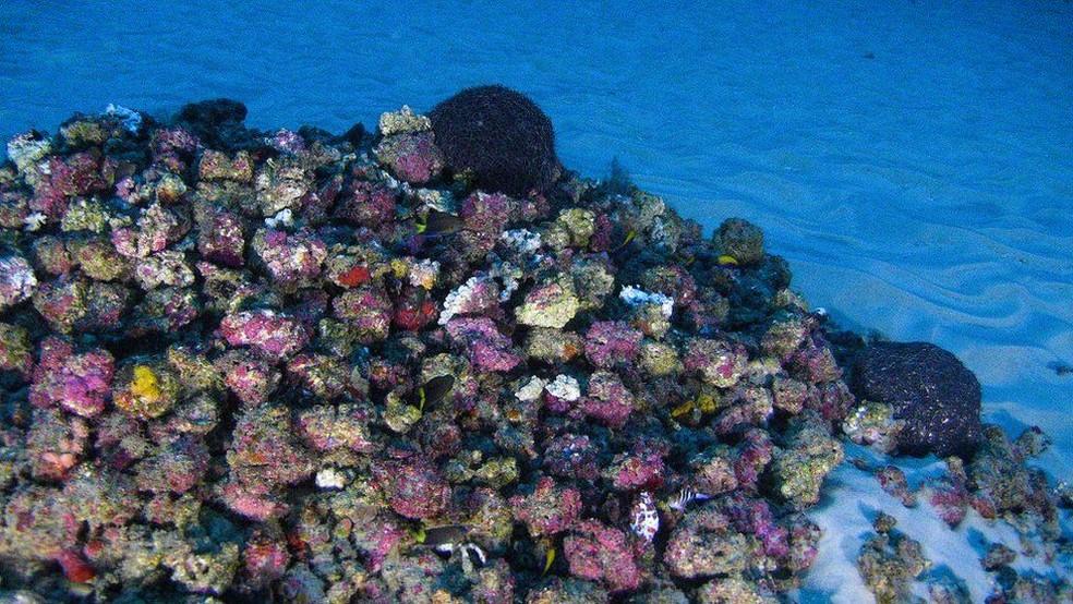 Corais se desenvolveram em condições únicas de disponibilidade de luz (Foto: Greenpeace)