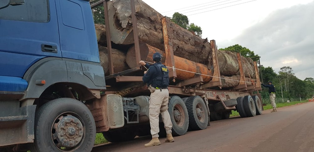 42m3 of Quaruba, Mirindiba, and Tanibuca logs seized in Santarém