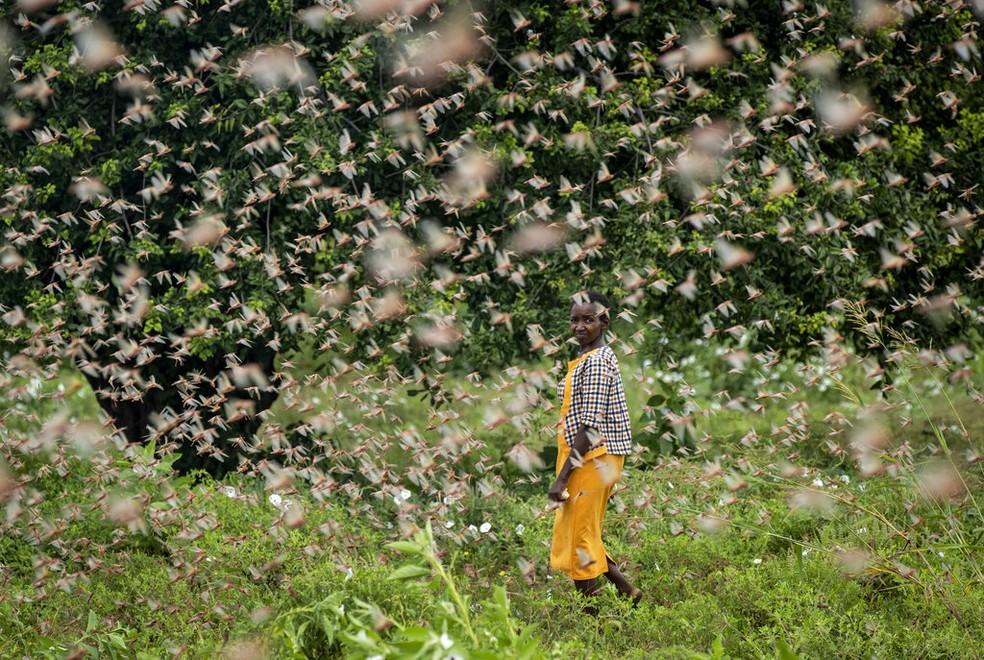 Um agricultor olha para trás enquanto caminha por um enxame de gafanhotos que se alimentam de sua plantação, na aldeia de Katitika, no Quênia — Foto: Ben Curtis/AP
