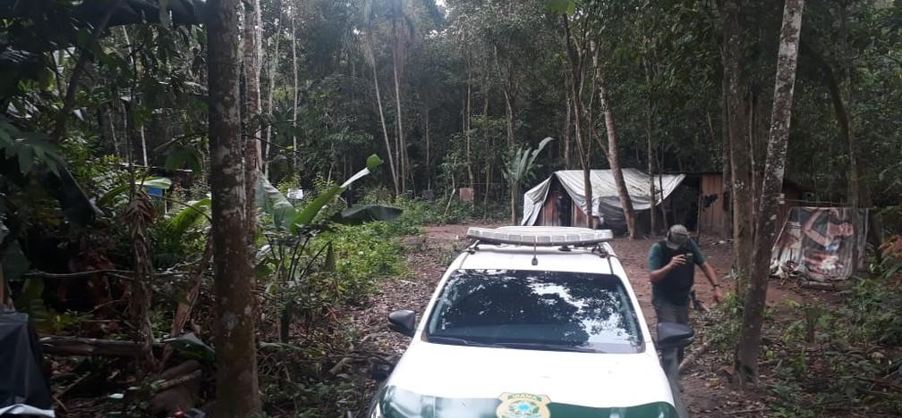 Operação do Ibama, Funai e policiais flagrou extração ilegal de Terra Indígena Urubu Branco, município de Confresa — Foto: Divulgação