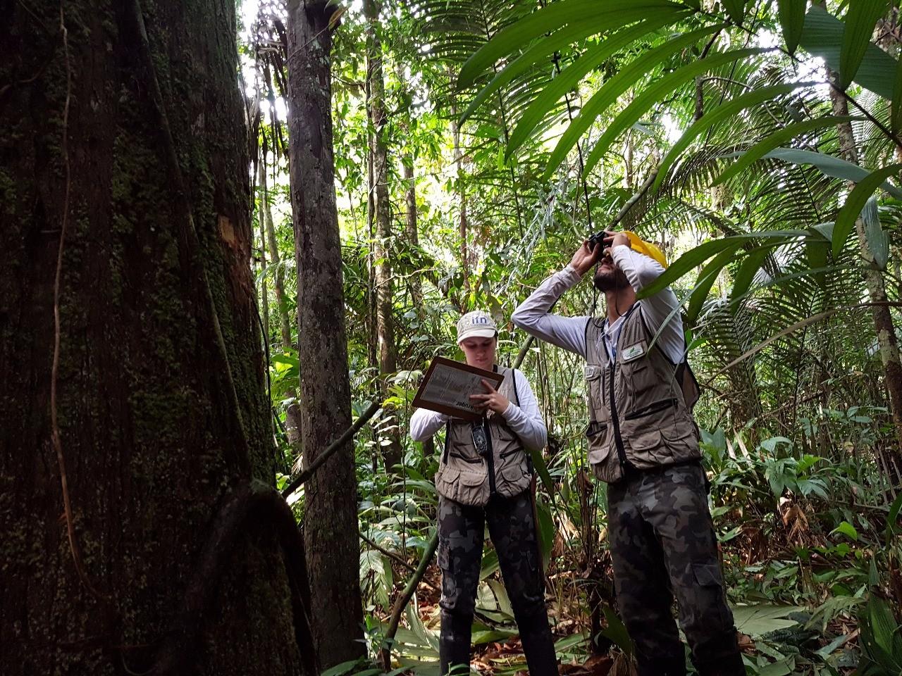 Pesquisadores coletam dados para inventário das florestas e esperam descobrir novas espécies de plantas em RR
