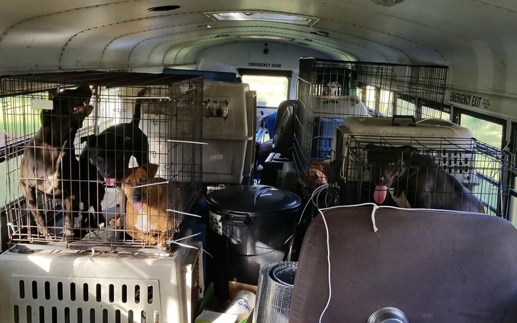 Animais transportados por Tony Alsup na traseira de seu ônibus escolar na Carolina do Sul — Foto: Reprodução/Facebook/Tony Alsup