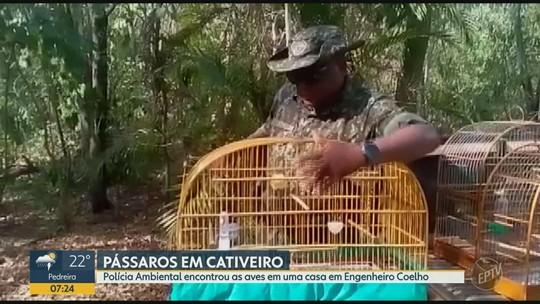 Polícia Ambiental apreende 15 pássaros silvestres em Engenheiro Coelho e homem é multado em R$ 43 mil