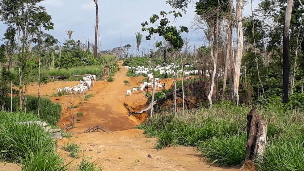 Parque Estadual Guajará-Mirim sofreu um aumento de 4.600% das áreas desmatadas (Foto: Luiz Martins/Rede Amazônica)