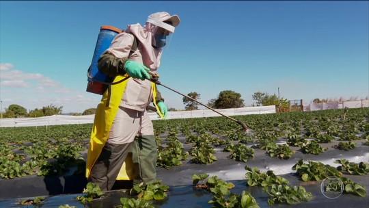 Anvisa aprova novo marco regulatório de classificação de agrotóxicos