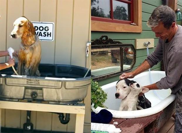 Dog shower: suporte para banheira caseira é uma alternativa ecônomica (Foto: Pinterest/Reprodução)