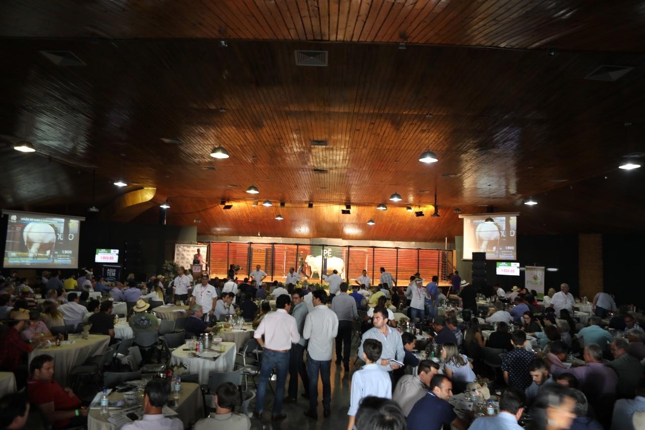 bovino-boi-zebu-leilão (Foto: Divulgação/ABCZ)