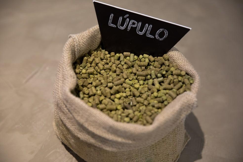 O lúpulo é o responsável por acrescentar aroma e amargor à cerveja (Foto: Marcelo Brandet/G1)