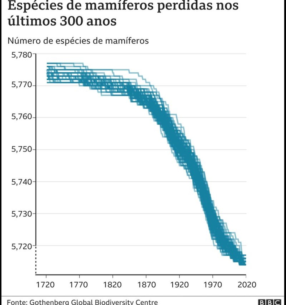 Espécies de mamíferos perdidas nos últimos 300 anos — Foto: BBC