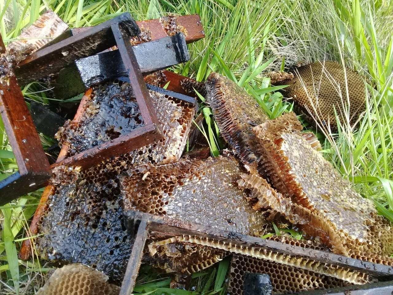 Cerca de 100 milhões de abelhas foram encontradas mortas em Cruz Alta apenas no último trimestre (Foto: Salvador Gonçalves/Apicruz)
