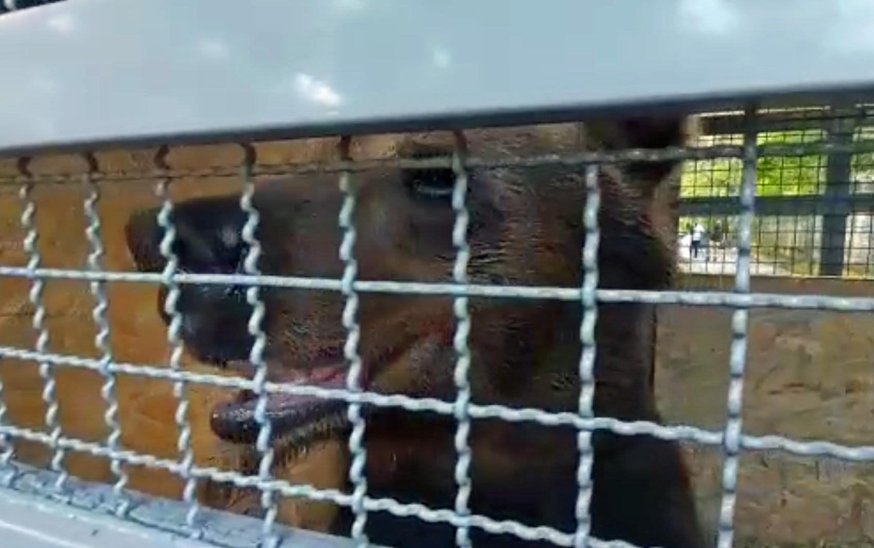 Após 18 anos morando em zoológico do Recife, ursa é transferida para santuário ecológico