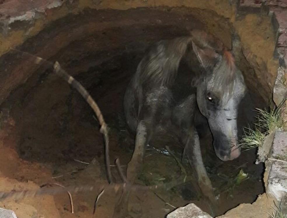 Cavalo foi resgatado e solto  (Foto: Divulgação/Associação de Moradores do Bairro Santa Fé)