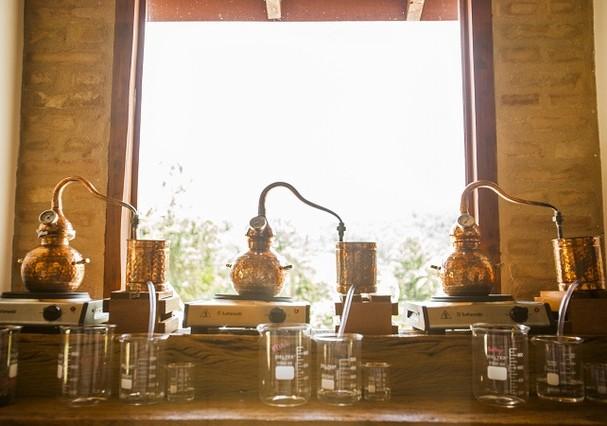 Agora você pode criar seu próprio gin (Foto: Divulgação)