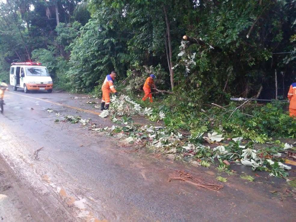 Em Camaçari, as chuvas fortes derrubaram algumas árvores. — Foto: Defesa Civil de Camaçari