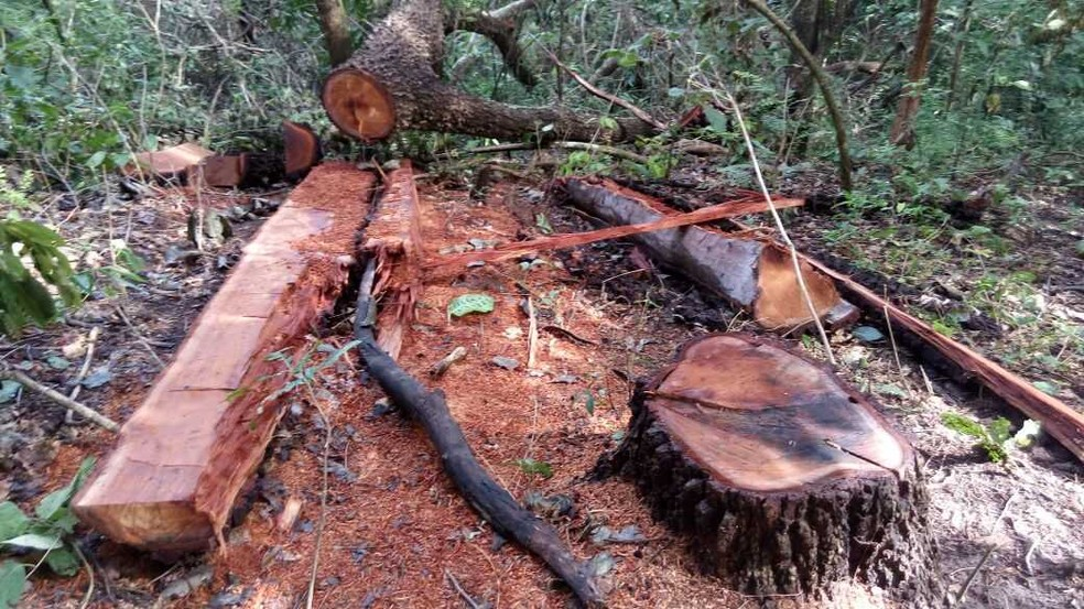 Pecuarista é multado em R$ 12,5 mil por exploração ilegal de madeira em Rio Verde MS (Foto: PMA/Divulgação)