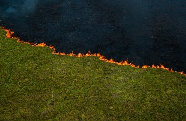 Artistas doam obras para arrecadar R$ 2 milhões no combate a incêndios no Pantanal (Foto: João Farkas / Divulgação)