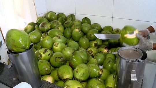 Produtores de coco de Linhares, ES, aumentam a produção para o verão