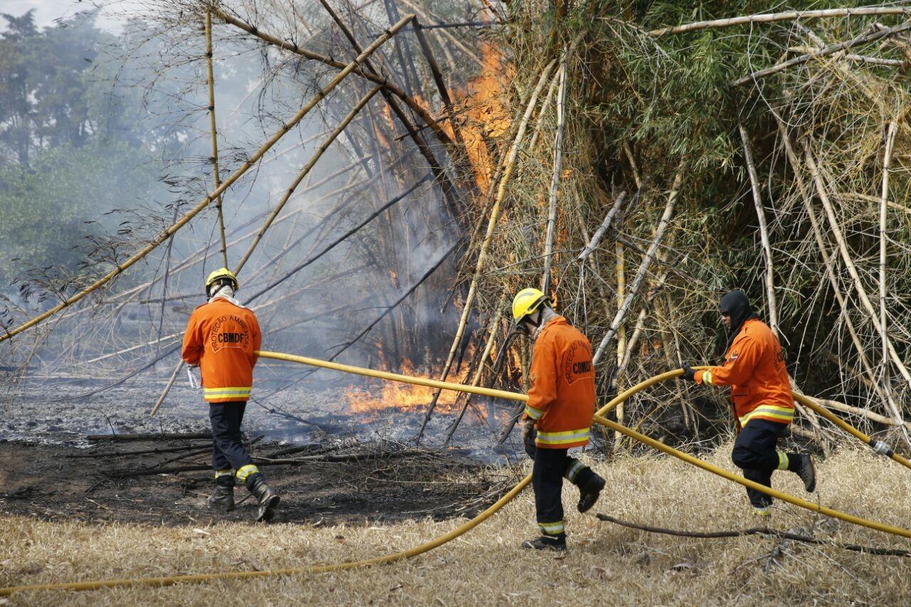 Incêndio no Parque Ecológico de Águas Claras, no DF, mobiliza 36 bombeiros