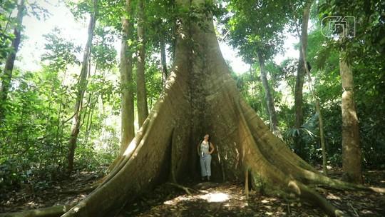5 dicas de destinos para curtir a diversidade da Amazônia no Pará