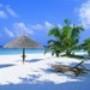 Papel de Parede: Exotic Paradise