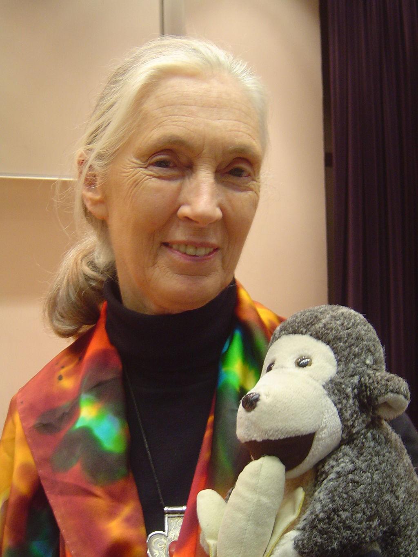 Jane Goodall segurando seu brinquedo, Mr. H, em 2006 (Foto: By Jeekc, via Wikimedia Commons)