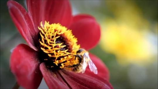 Abelhas ajudam indústrias de alimentos, beleza e farmacêutica