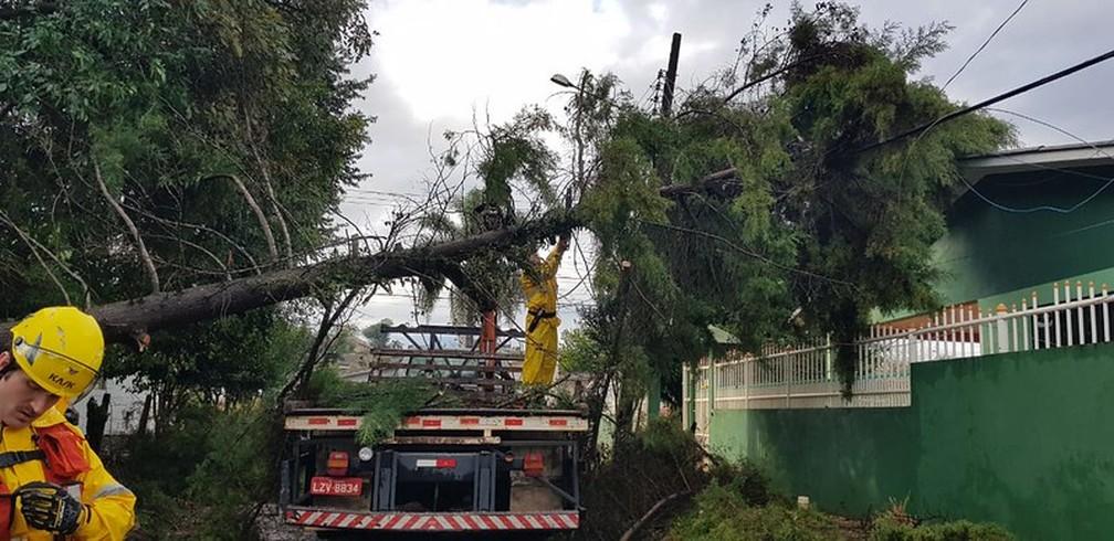 Corpo de Bombeiros retiram árvore em Curitibanos — Foto: CBMSC/ Divulgação