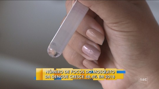 Focos do Aedes aegypti crescem 48,4% em SC e 73 municípios são considerados infestados