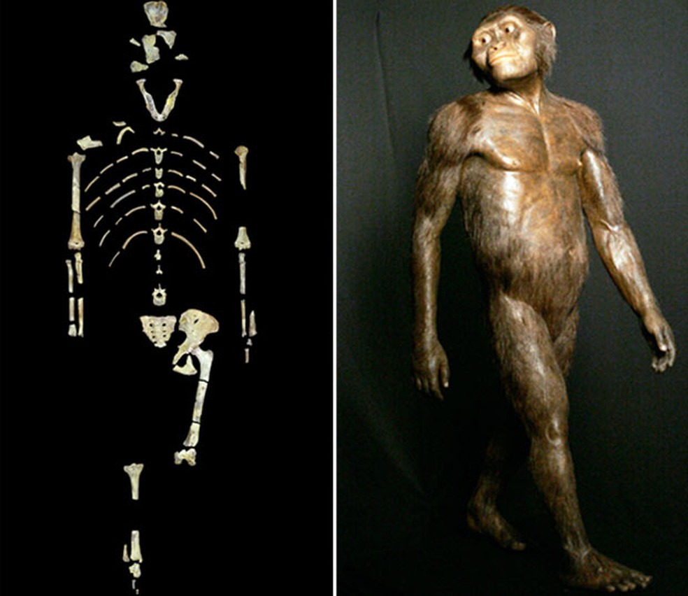 Montagem de fotos mostra o esqueleto de Lucy e um modelo tridimensional do Australopithecus afarensis — Foto: University of Texas at Austin via AP/AP Photo/Pat Sullivan