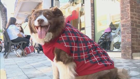 Com a chegada do inverno, malharias de Monte Sião apostam em peças para pets