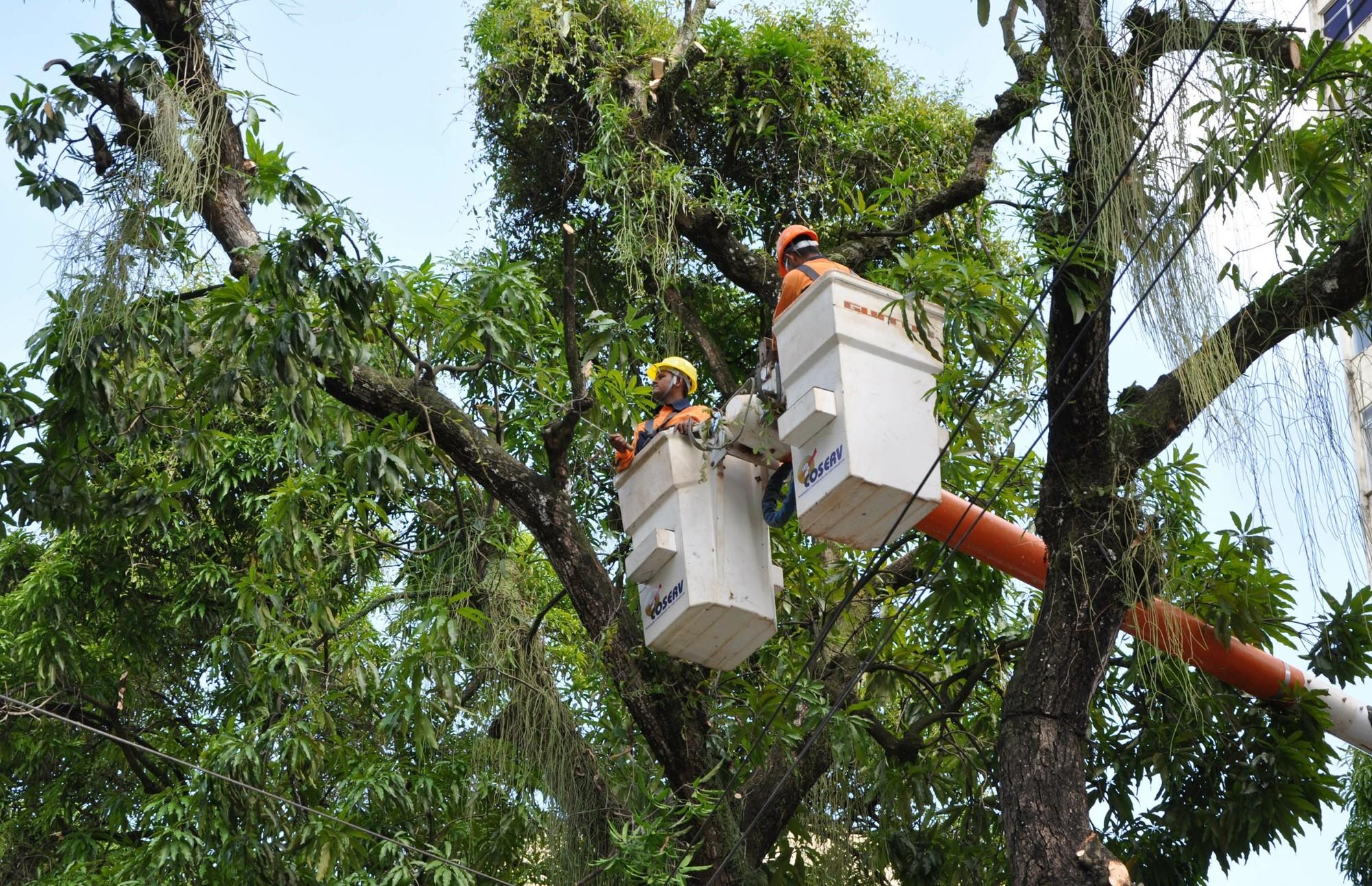 Avenida Generalíssimo Deodoro será  interditada para serviço de poda de árvores neste sábado, 11