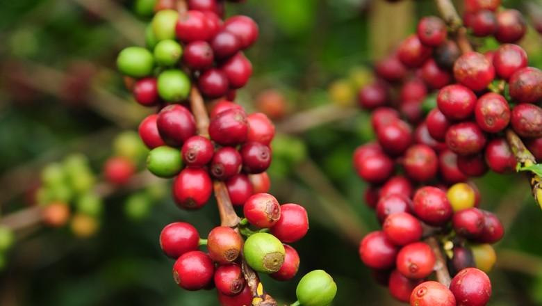 café-cafe-grao (Foto: Ernesto de Souza/ Ed. Globo)