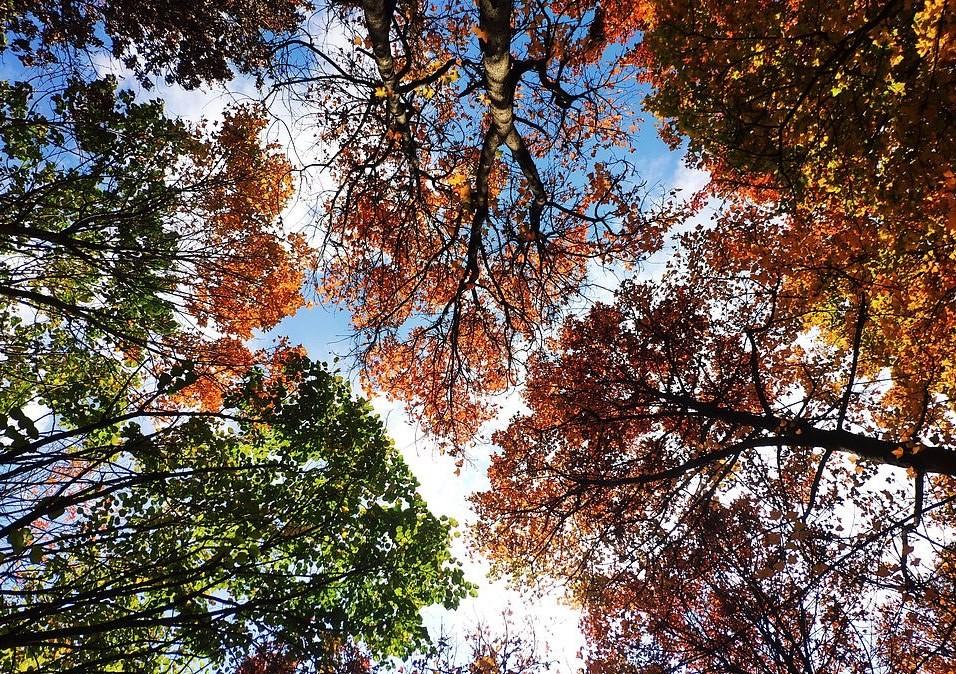 """A fotografia captura um fenômeno denominado """"timidez da coroa"""", em que as copas das árvores não se tocam (Foto: BMC Ecology/Zu-Chang Xu)"""
