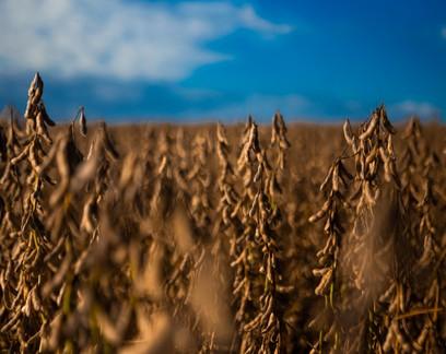 Imea eleva previsão da produção de soja em 2020/2021 em Mato Grosso