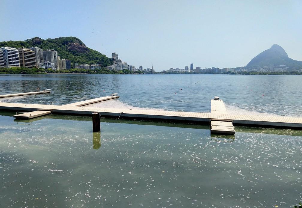 Peixes mortos na Lagoa Rodrigo de Freitas  — Foto: Marcos Serra Lima/G1