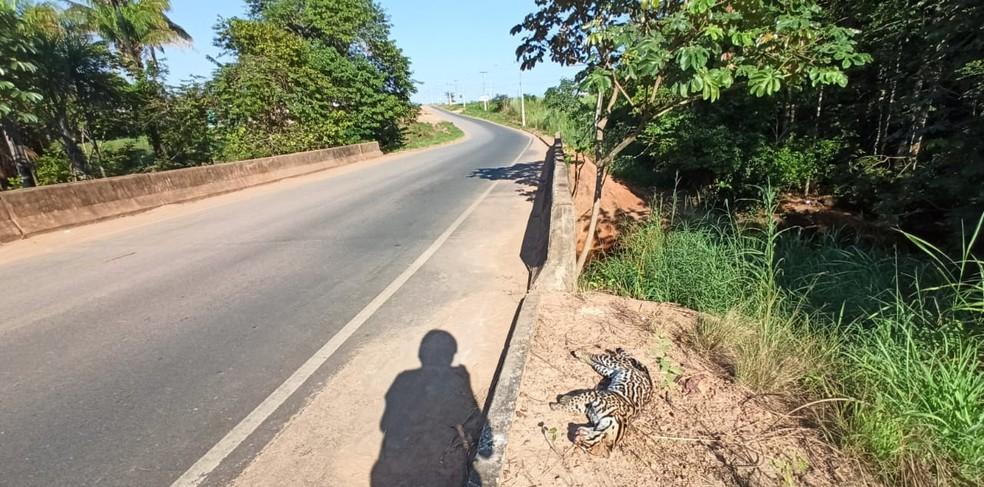 Animal estava caído próximo a uma ponte — Foto: Divulgação/PM-RR