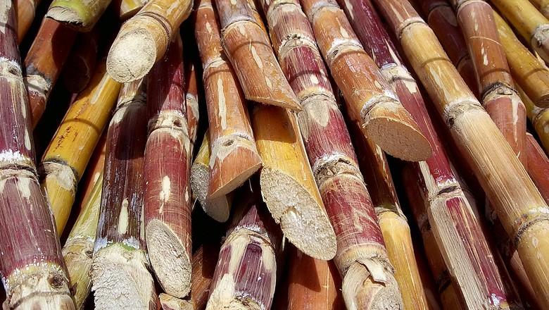 cana-surgane-energia-etanol (Foto: Creative Commons)