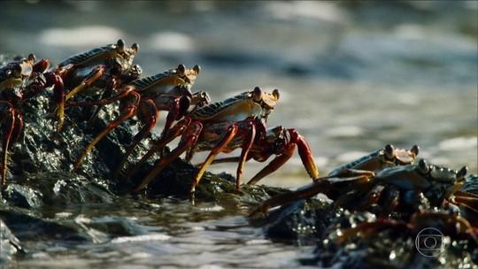 Maré baixa proporciona banquete para caranguejos e outros animais