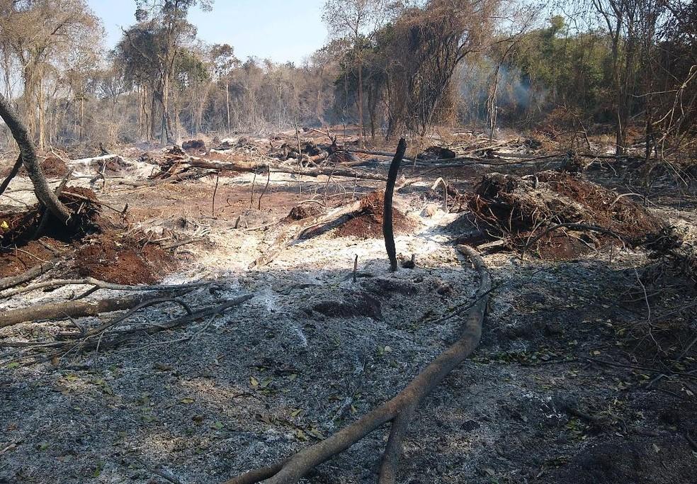 Todas as áreas danificadas somam 126,6 hectares — Foto: PMA/Divulgação