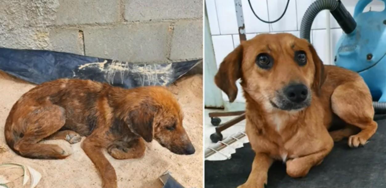 Paraná registra 16 denúncias de maus-tratos a animais por dia