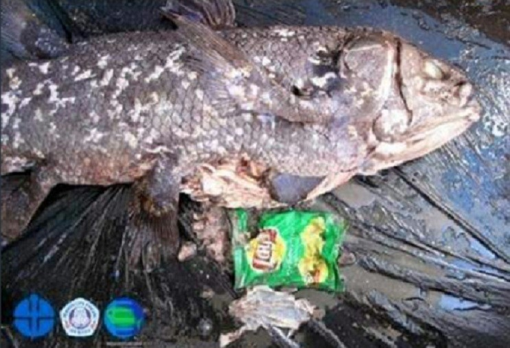 Embalagem de salgadinho retirada de peixe (Foto: Reprodução)