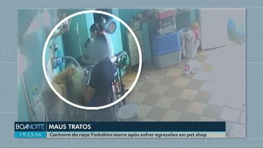 Vídeo mostra funcionária agredindo cachorro em pet shop; animal morreu