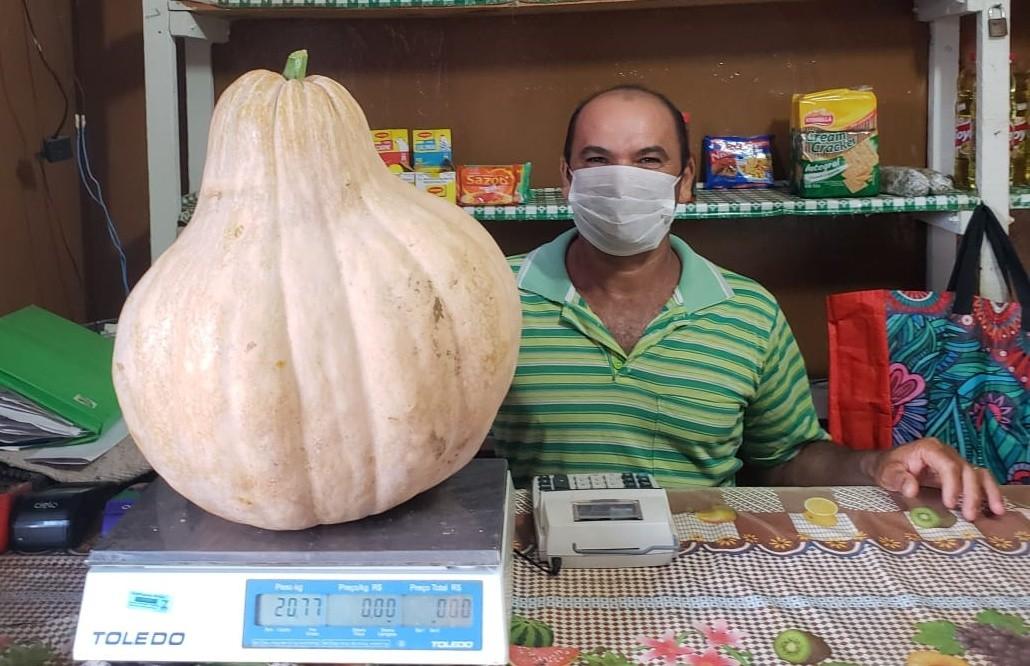 Agricultor de Fernando de Noronha colhe abóbora gigante, com mais de 20 quilos